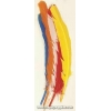 "Turkey Quill 12"" Assorted colors"